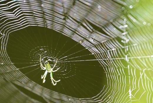 Spider 061717